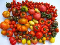 images tomaten