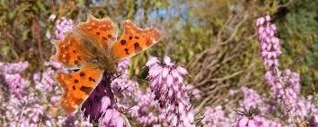 imagesEen bijen- en vlindervriendelijke tuin2